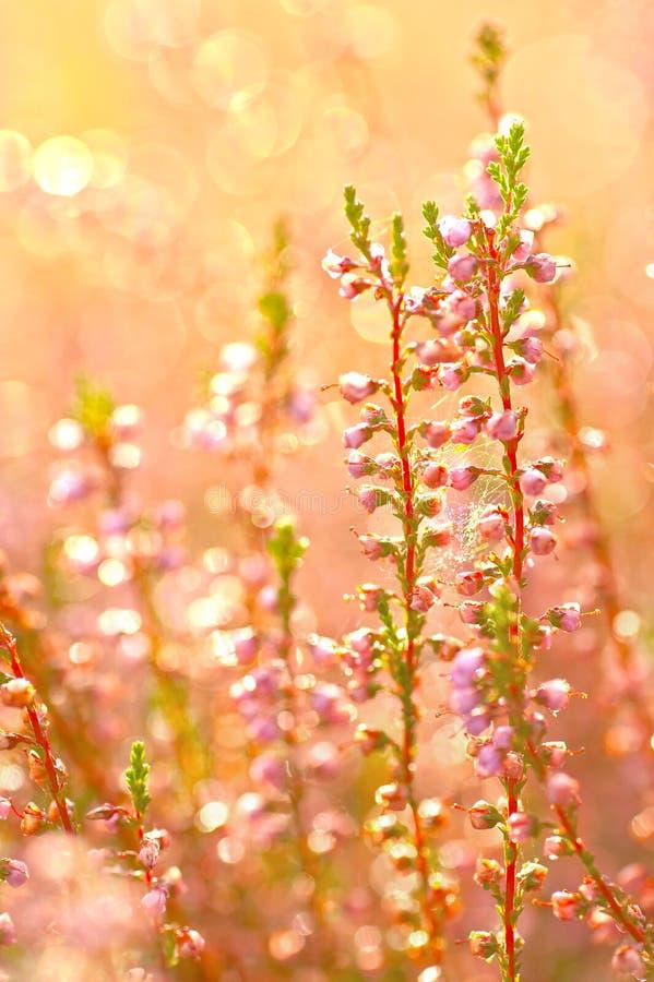De bloemen van de herfst royalty-vrije stock afbeeldingen
