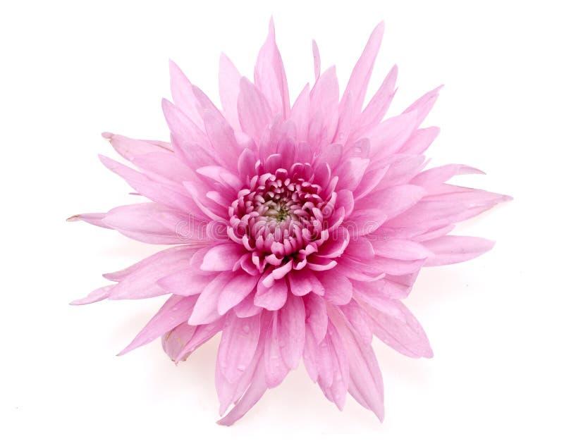 De bloemen van de herfst royalty-vrije stock foto
