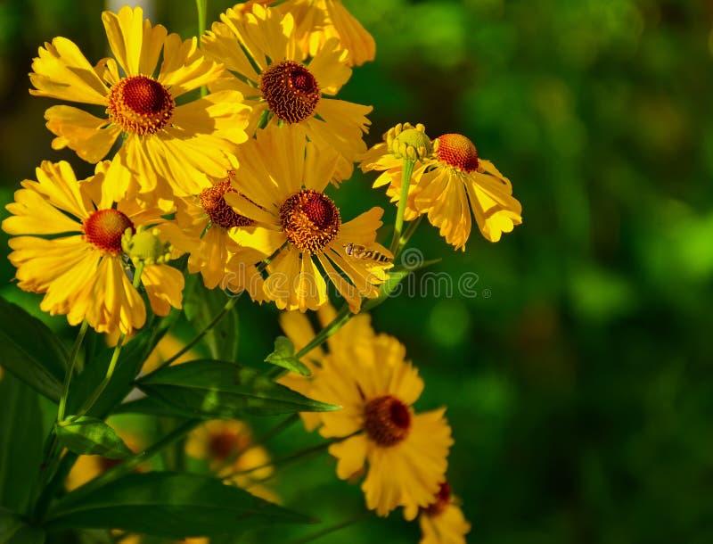 De bloemen van de herfst Vector vakantiekaart royalty-vrije stock afbeeldingen