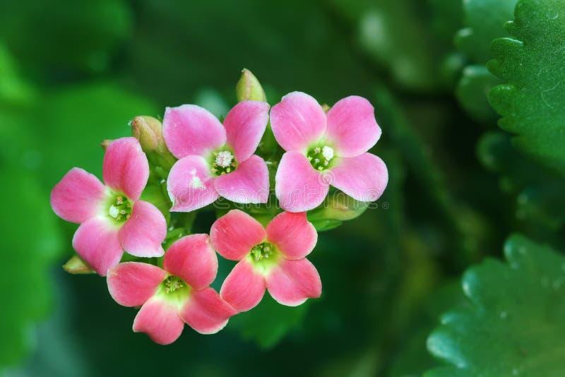 De Bloemen van de jonquille stock foto