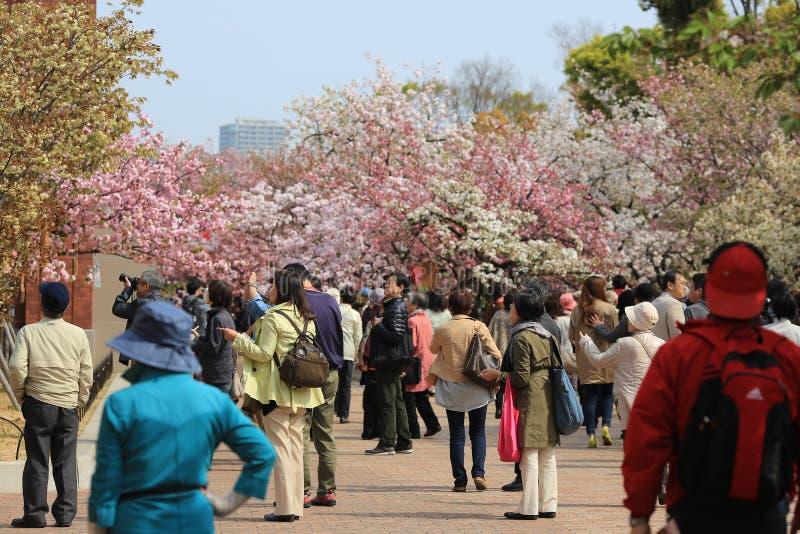 De bloemen van de kersenbloesem in tuin bij de Munt van Japan royalty-vrije stock afbeelding