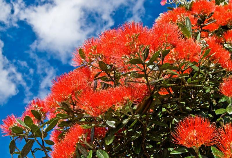 De bloemen van de kerstboom royalty-vrije stock afbeeldingen