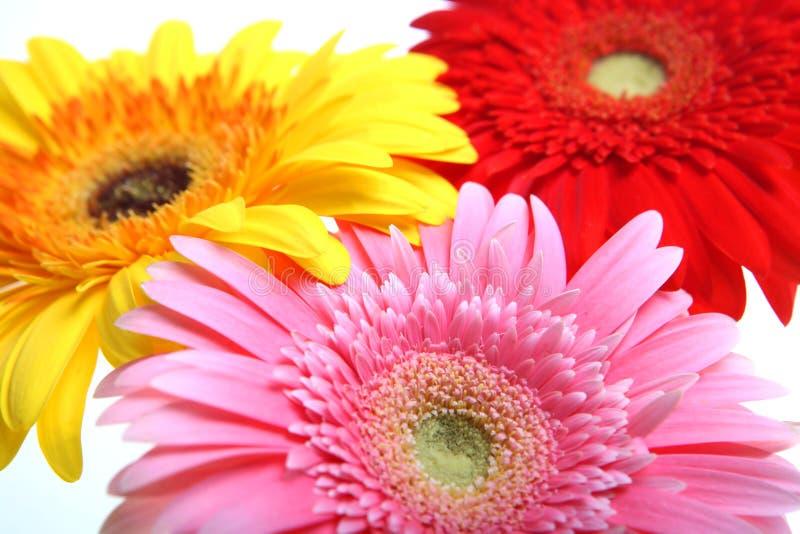 De bloemen van de kleur stock afbeelding