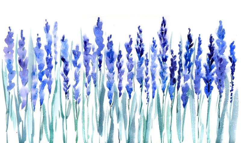 De bloemen van de lavendel stock fotografie