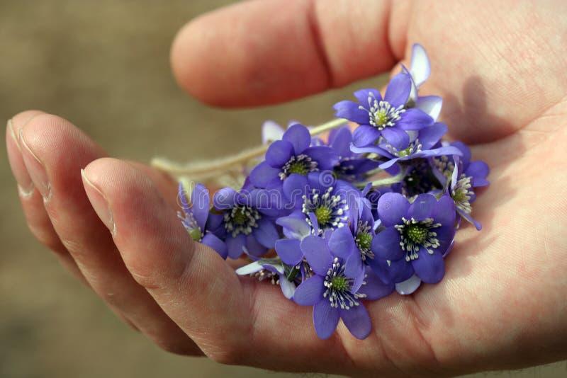 De Bloemen van de lente stock fotografie