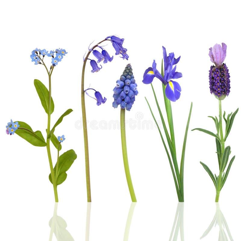 De Bloemen van de lente in Blauw royalty-vrije stock afbeeldingen