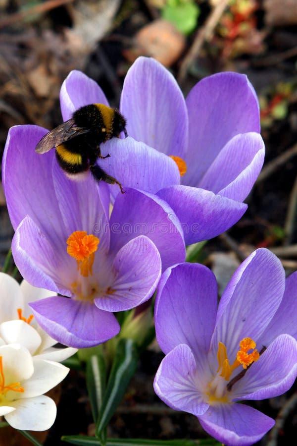 De bloemen van de lente in een tuin. stock foto
