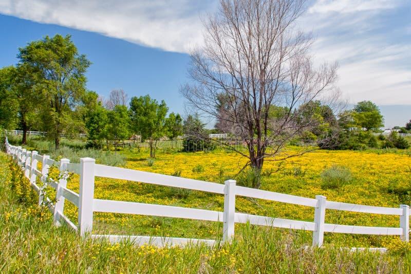 De Bloemen van de lente in Omheining Gevoerd Weiland in de Prairie van Midwesten stock foto