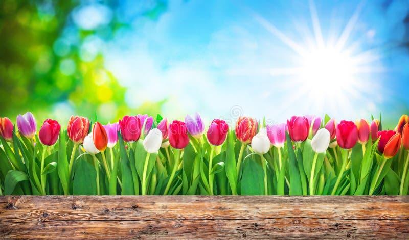 De bloemen van de lentetulpen royalty-vrije stock foto's