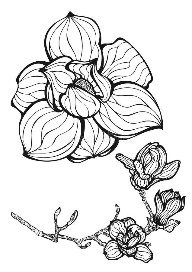 De bloemen van de magnolia royalty-vrije illustratie