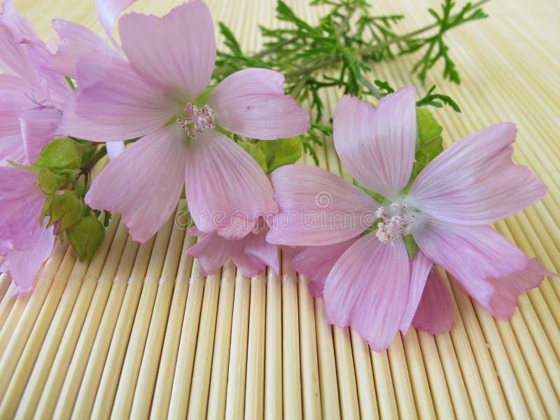 De bloemen van de malve royalty-vrije stock foto