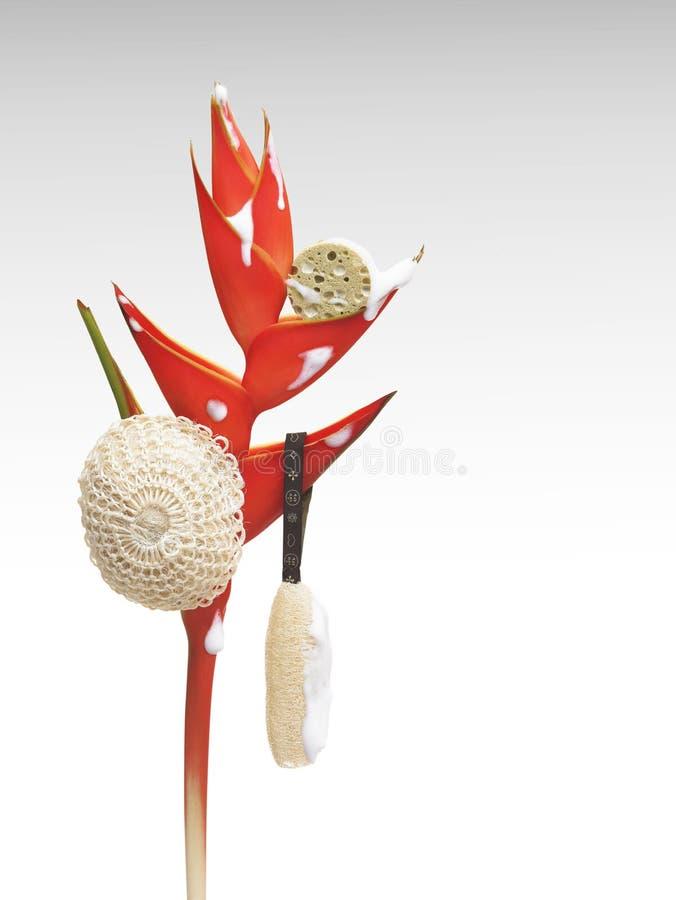 De bloemen van de paradijsvogel met kuuroordtoebehoren stock afbeelding