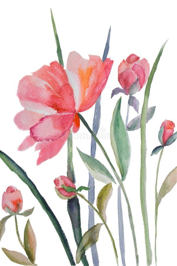 De bloemen van de pioen stock illustratie
