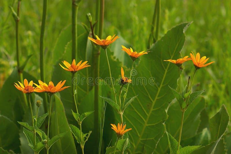 De Bloemen Van De Prairie Stock Afbeelding