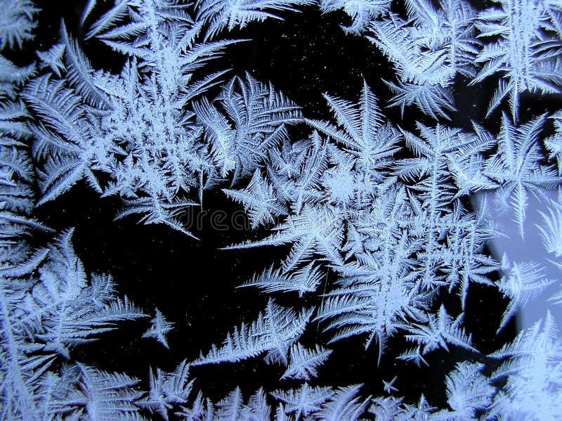 De bloemen van de sneeuw royalty-vrije stock afbeelding