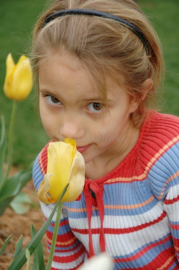 De Bloemen van de Tijd van de lente royalty-vrije stock afbeeldingen