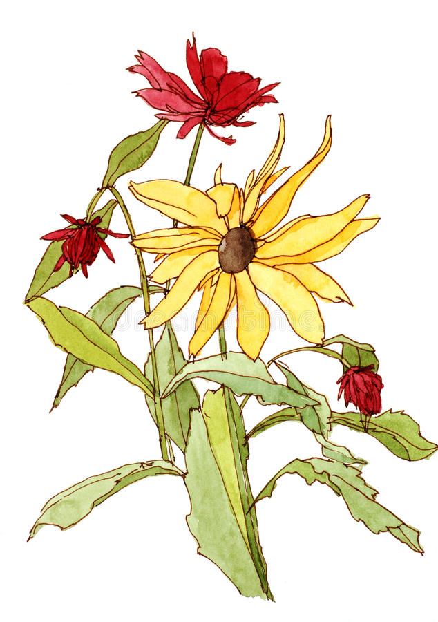 De bloemen van de tuin stock afbeeldingen