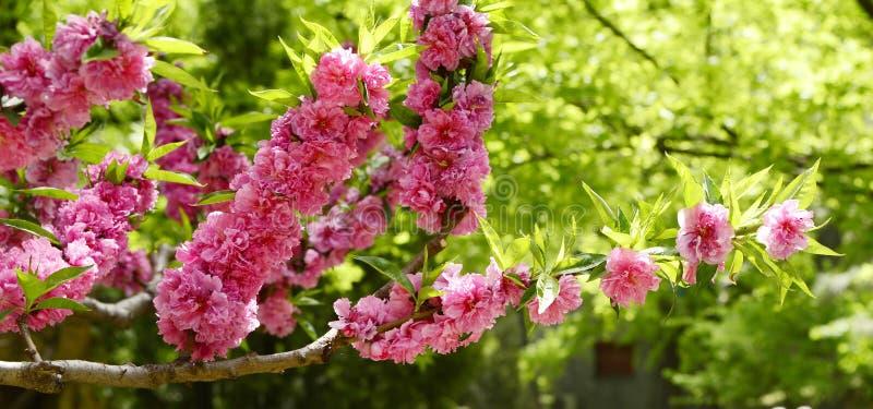 De bloemen van de tuin stock foto's
