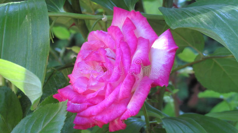 De bloemen van de tuin royalty-vrije stock afbeelding