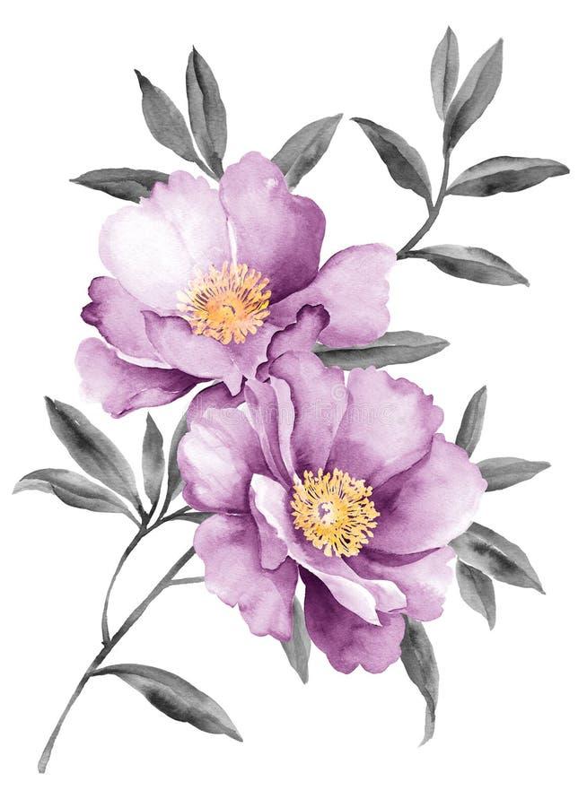 De bloemen van de waterverfillustratie stock foto's