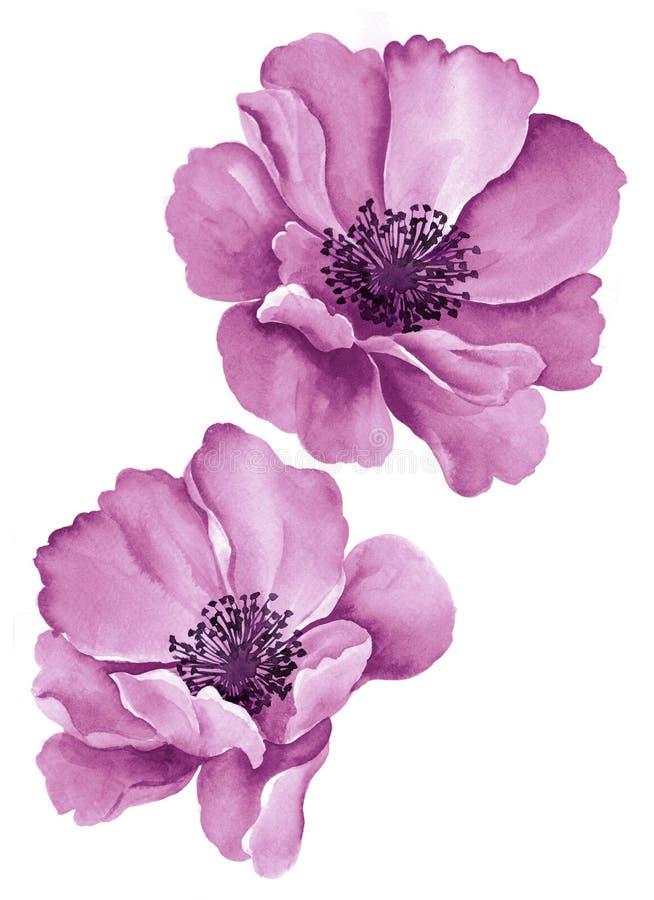 De bloemen van de waterverfillustratie stock foto
