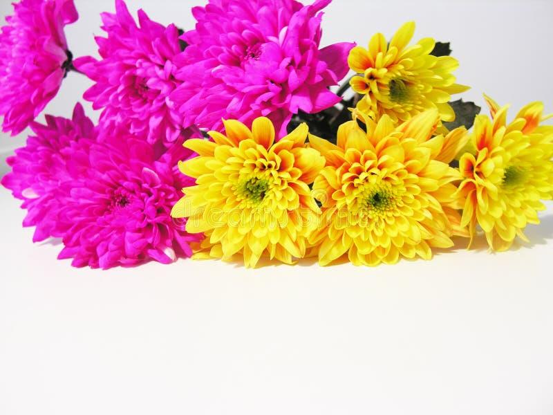 Download De bloemen van de zomer stock foto. Afbeelding bestaande uit roze - 288594