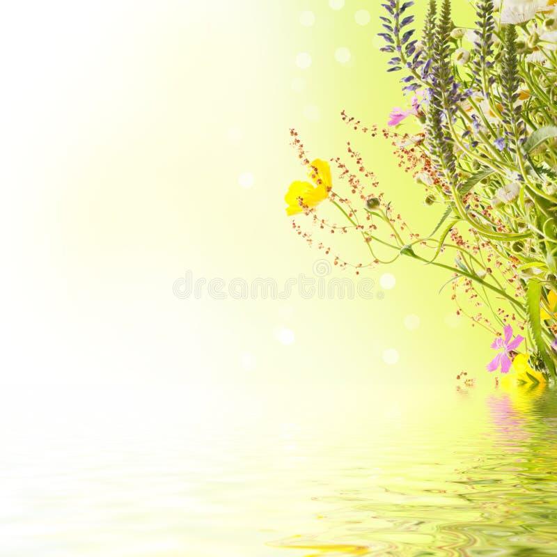 De bloemen van de zomer royalty-vrije illustratie