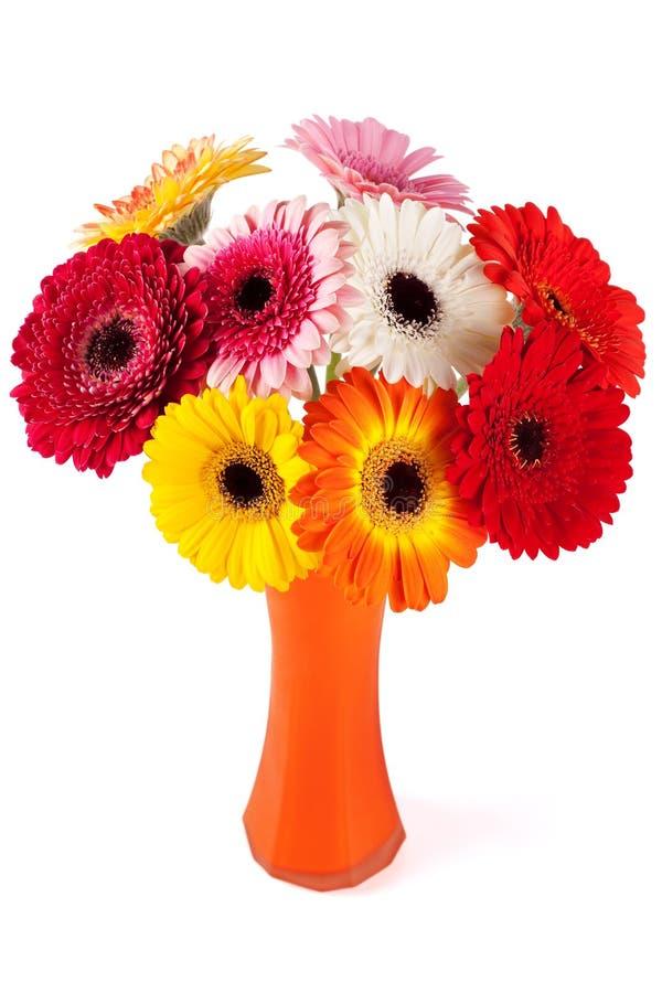 De bloemen van Gerbera royalty-vrije stock foto's