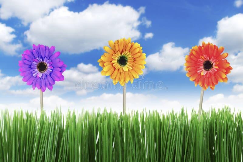 De bloemen van Gerbera in de lente stock afbeeldingen
