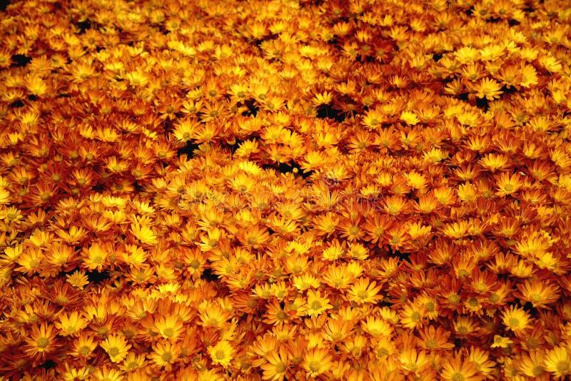 De Bloemen van Halloween stock afbeelding