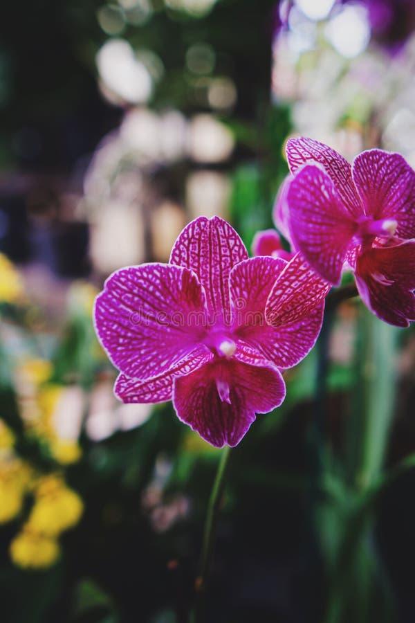 De bloemen van het flamingokinderdagverblijf stock foto
