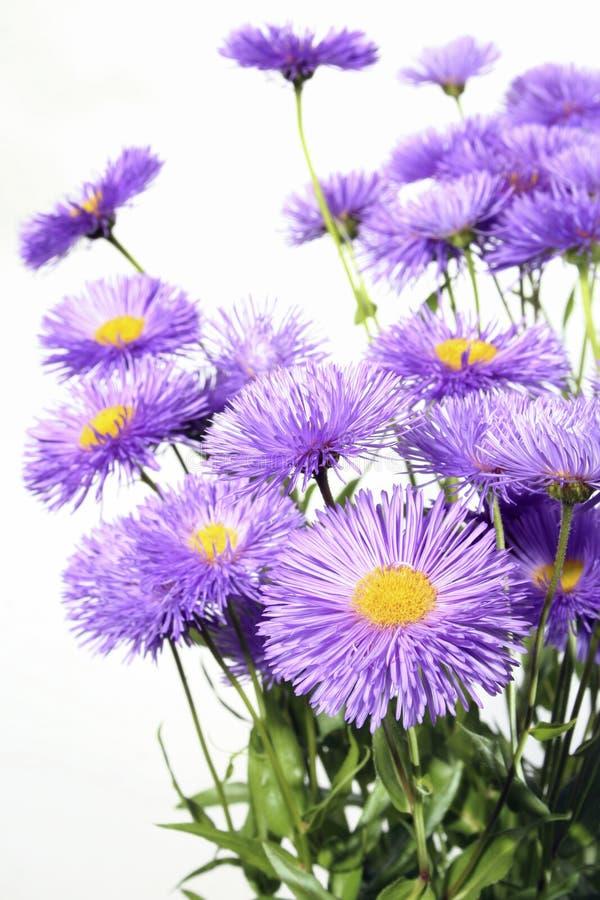 De bloemen van het gebied royalty-vrije stock fotografie