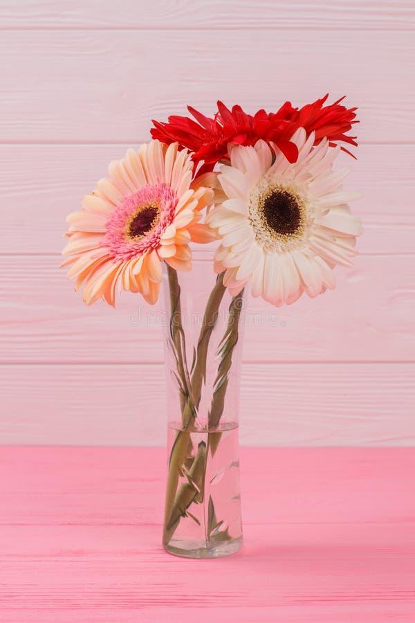 De bloemen van het Gerberamadeliefje in een transparante vaas royalty-vrije stock afbeelding