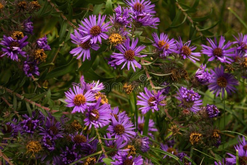 De bloemen van het de herfstgebied op een bloemtuin stock afbeeldingen