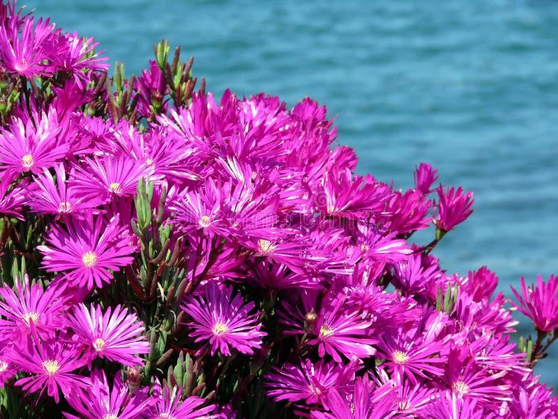 De Bloemen van het ijs stock afbeeldingen