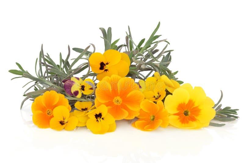 De Bloemen van het Kruid en van de Altviool van de lavendel stock foto's