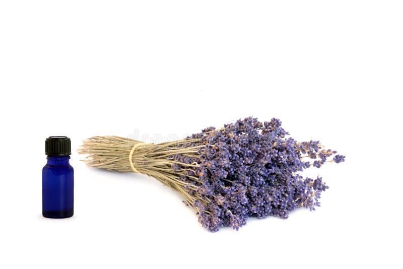 Lavendel Herb Flowers Gratis Stock Fotografie