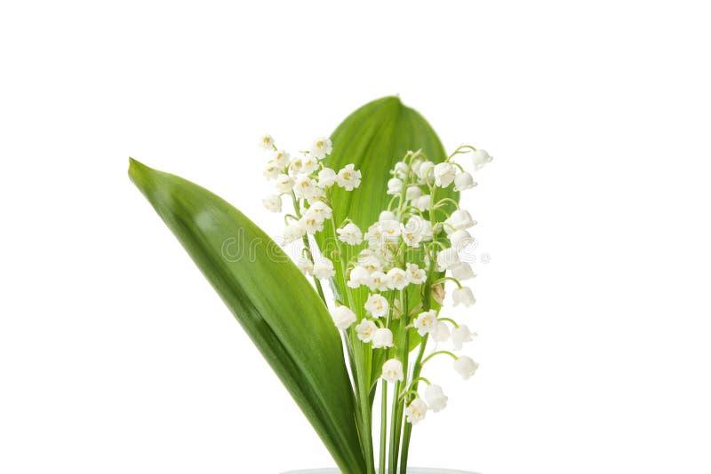De bloemen van het lelietje-van-dalen stock afbeeldingen