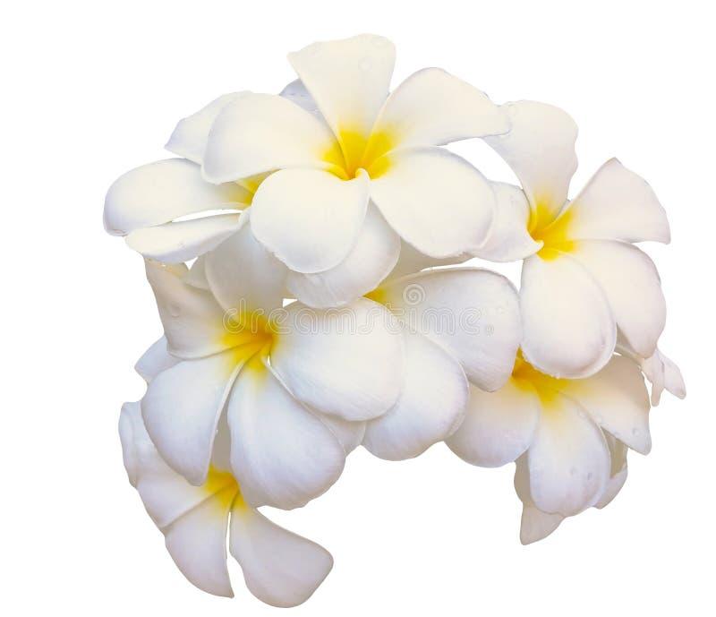 De bloemen van het Plumeriaboeket op witte achtergrond worden geïsoleerd die royalty-vrije stock afbeelding