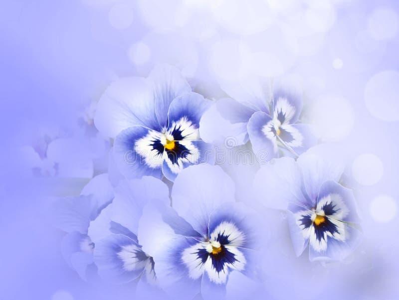 De bloemen van het viooltje royalty-vrije stock afbeelding