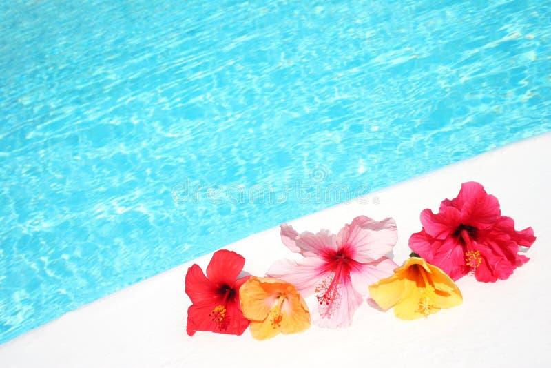 De Bloemen van Hibicus door Pool royalty-vrije stock foto's