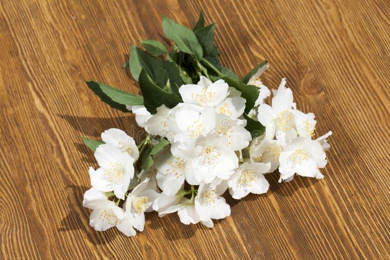 De bloemen van de jasmijn stock afbeelding