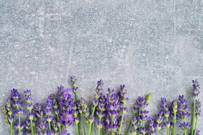 De bloemen van de lavendel op grijze achtergrond Exemplaar ruimte, hoogste mening Summe stock foto's