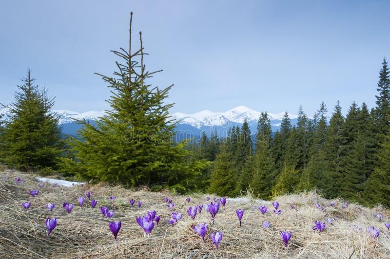 De bloemen van de lente in de bergen royalty-vrije stock afbeeldingen