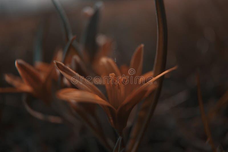De bloemen van de lente in de weide stock afbeeldingen