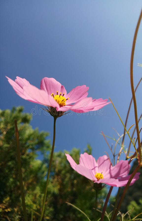 De bloemen van de liefdeaard stock afbeeldingen