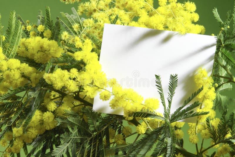 Mimosabloemen met lege kaart stock foto