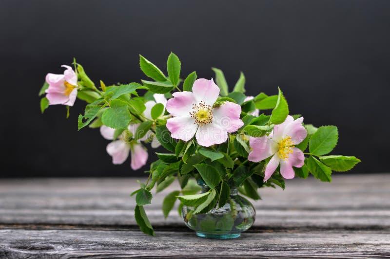 De bloemen van de moedersdag Stilleven met wilde rozen in vaas stock foto