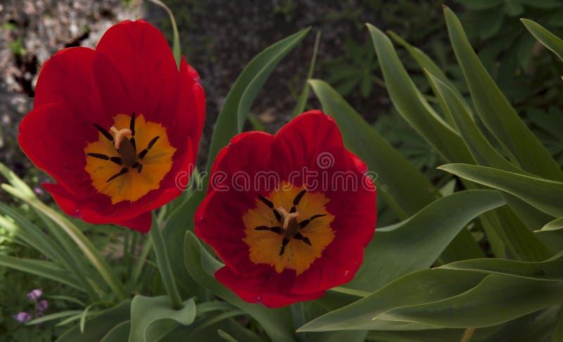 De bloemen van Nice royalty-vrije stock foto