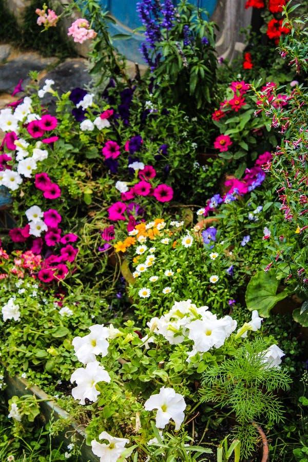 De bloemen van Nieuw Zeeland in de zomer stock foto's